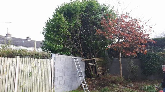 Tree Thinning, Pruning & Shaping